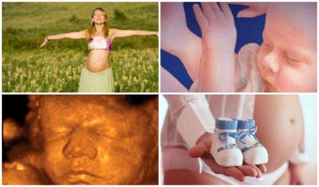 Что происходит с малышом на 35 неделе беременности?