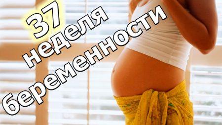 37 недель акушерской беременности