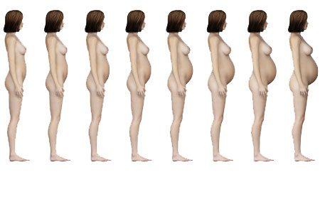 Рост живота женщины при беременности