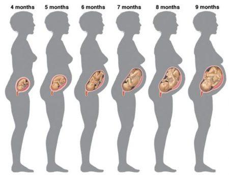 Расположение ребенка в животе матери